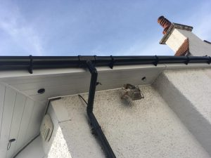 Roofer Paisley